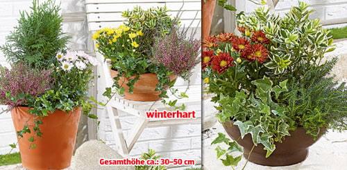 bepflanzte terracotta schale 1 st ck getrocknete blumen pflanzen garten rasen und. Black Bedroom Furniture Sets. Home Design Ideas